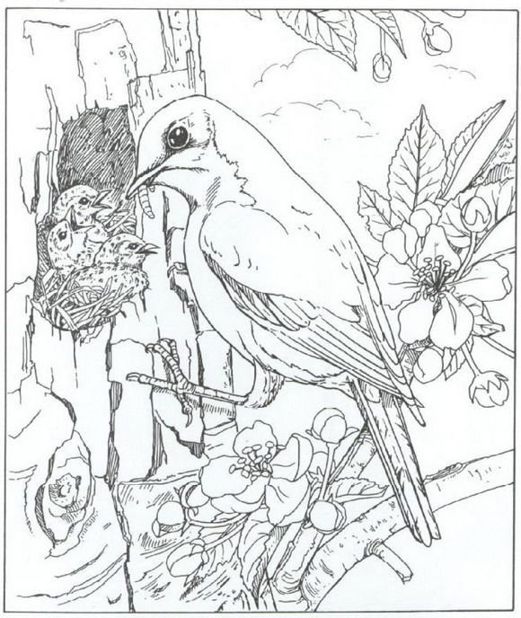 Coloring Page Nature Around The House Coloring Pages Nature