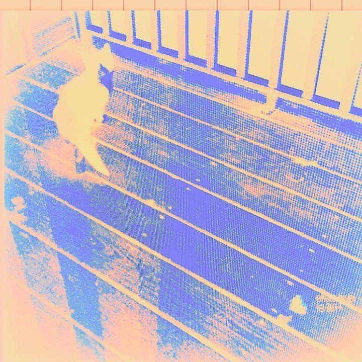 "141 Me gusta, 26 comentarios - JulieL (@trujule) en Instagram: ""Cat through a mesh screen door ~ #IGW_color #patina_perfection #jj_colorlove #jj_moodyhues…"""