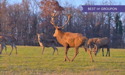 Les Lodges du Grand Cerf Blanc à Courtivron : Escapade insolite en Bourgogne: #COURTIVRON 89.00€ au lieu de 149.00€ (40% de réduction)