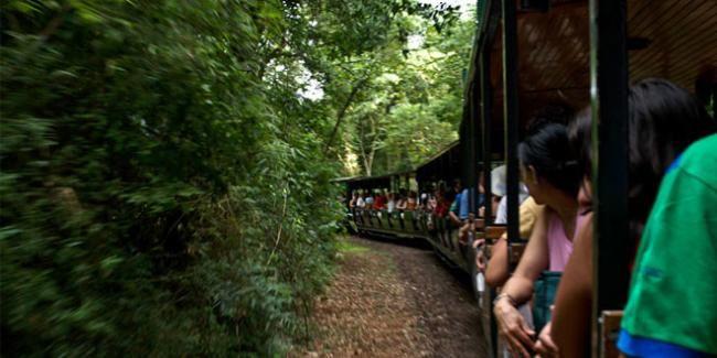 El Tren Ecológico de la Selva en las Cataratas del Iguazú