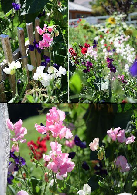21 best Gartenpflanzen images on Pinterest   Gartenpflanzen ...