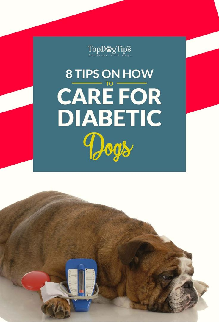Caring for A Diabetic Dog