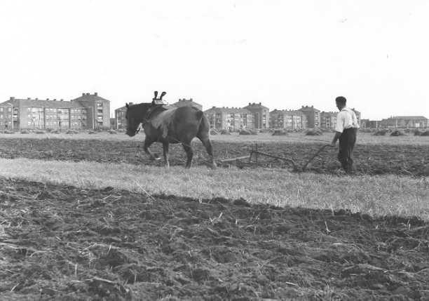 Tilburg behield tot in de jaren zestig nog deels de zichtbare aanwezigheid van de agrarische sector zoals hier  een ploegende boer op zijn akker dicht bij de kruising Lage Witsiebaan en Reitse Hoevenstraat. Op de  achtergrond de eerste Tilburgse flats uit 1951 aan de Ringbaan-West. Foto uit 1957. (coll. RHC Tilburg).