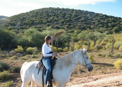 Horse Safari in Little Karoo - The Little Karoo is home to many reptiles, birds and mammals. Exploring this amazing wildlife from Horse Back can be a thrilling experience! Saddle up and join our operators on a Guided Horse Safari in the Little Karoo. Outrides are suited for both beginners and experienced riders.