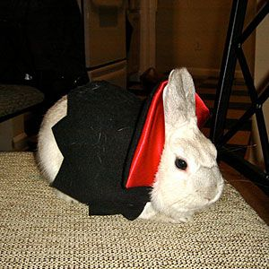 Vampire Bunny | Pet Halloween Costume Contest - Southern Living Mobile