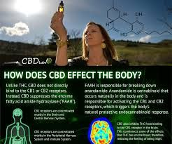 Image result for cbd oil quotes