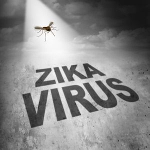 New clues on how Zika virus causes microcephaly