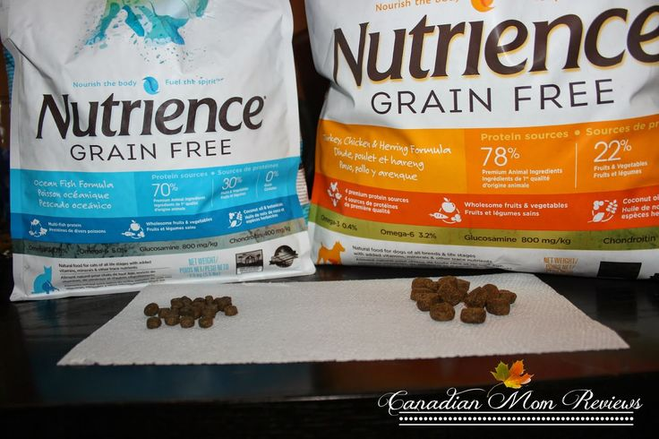 Nutrience Grain Free Dog and Cat Food – Review