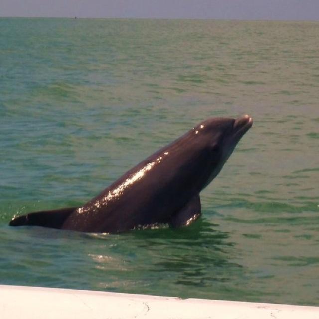 Swim With Dolphins Sanibel Island Fl