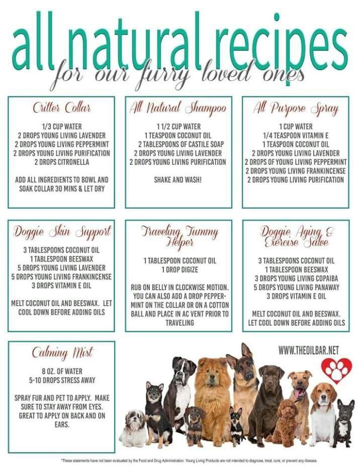 All natural recipes Essential oils dogs, Dog essentials