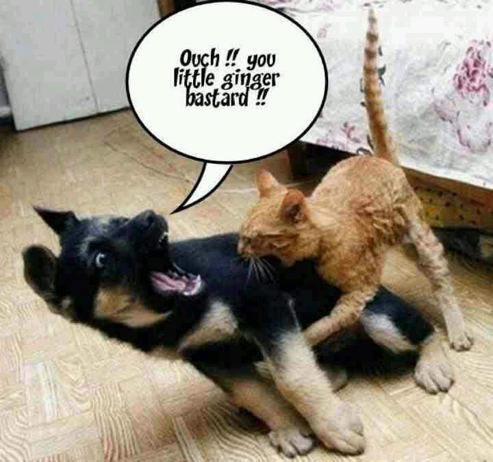 This made me laugh more than It should... But I bet all dogs think this when they're attacked by the cat.....