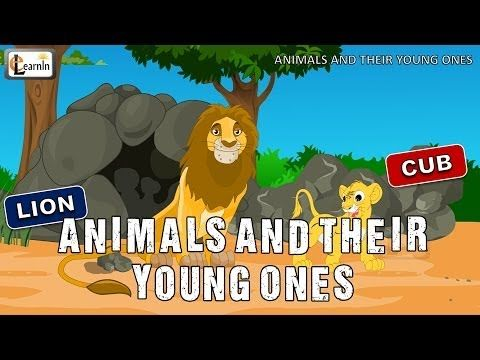 ▶ Animals and their Young Ones | The Baby Animals Song | Mother and baby animals | elearnin - YouTube