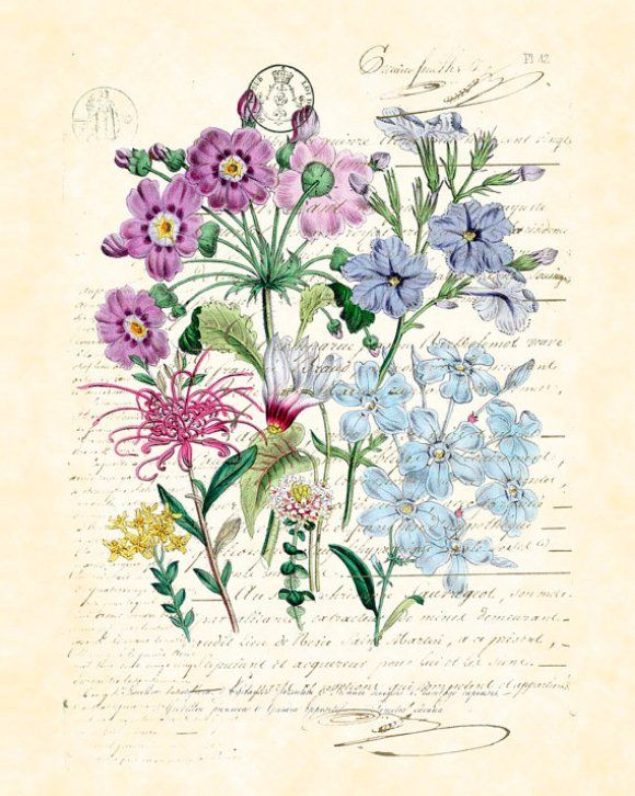 Botanical Art Prints: An Addiction  http://blog.freepeople.com/2012/07/botanical-art-prints-addiction/