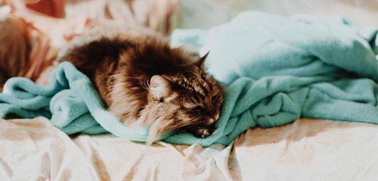 Trucos para eliminar los pelos de gato del hogar - http://www.bezzia.com/trucos-para-eliminar-los-pelos-de-gato-de-los-textiles/