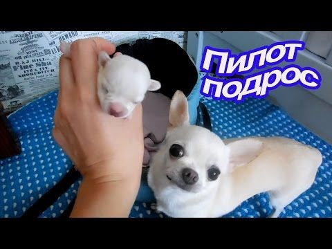 VLOG: С Макой на УЗИ / Шопимся / Строим Штаб - YouTube