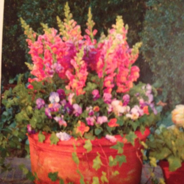 Featured Potted Arrangement In March Southern Living Snap