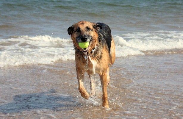 Od początku maja właściciele psów mogą zabierać swoich pupili na 100-metrowy odcinek w Gdyni Orłowie, ok. 1 km za sceną letnią Teatru Miejskiego w stronę Gdańska.
