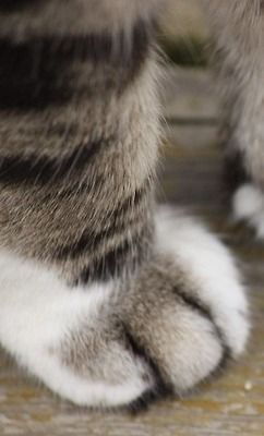kitty paw