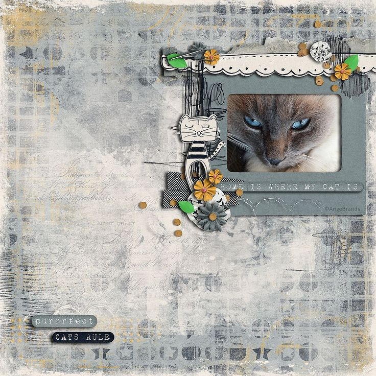 MY NULLAH BOY <3  ARTWORK ©AngeBrands..All rights reserved  I used the WONDERFUL KIT....Cattitude by Captivated Visions http://www.sweetshoppedesigns.com/sweetshoppe/product.php?productid=35116&cat=763&page=1 Photo my own