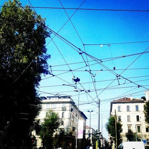 Milano porta lodovica.  The wire