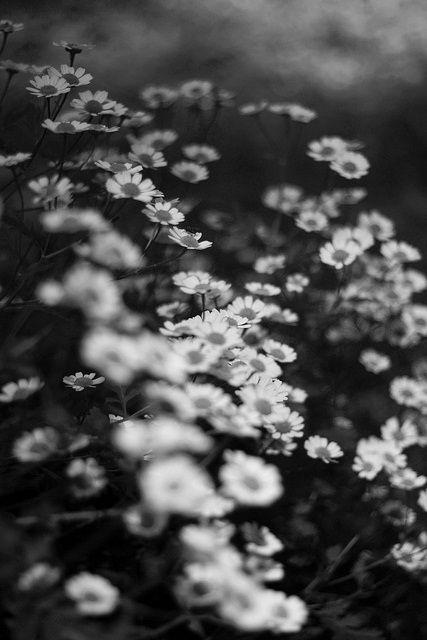 Albastre flori de mai...