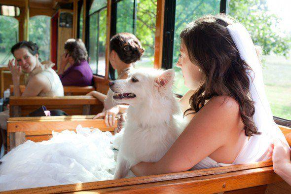 10 Steps to a #Pet Friendly #Wedding via Rustic Wedding