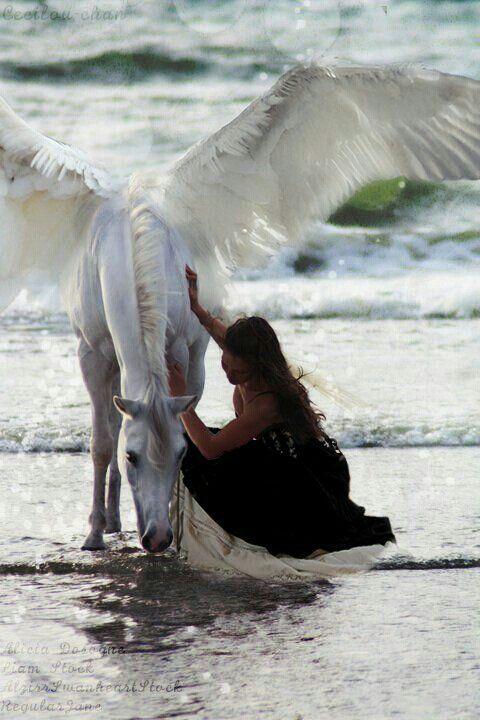 The Magic of Pegasus