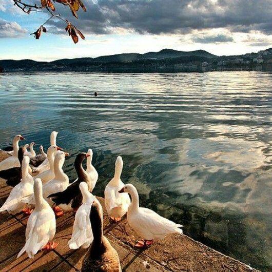 Kastoria lake, Macedonia, Greece