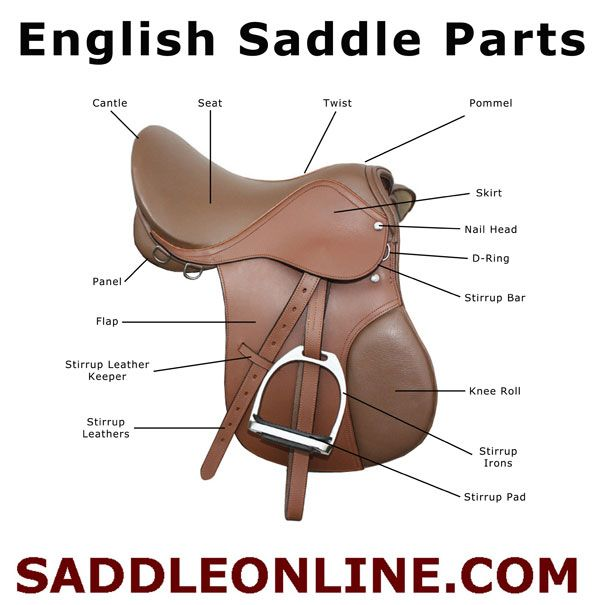 the different parts of a horse saddle Saddle pads: a cushion of comfort different saddle the same is true if your saddle is too long or too wide for your horse, if the angle of the bars (the part.