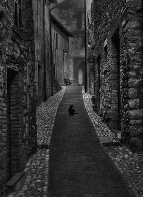 Dark Street...#b/w #alley #cat