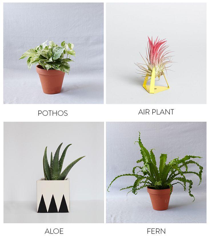 96 best bathroom plants images on pinterest bathroom for Small bathroom plants