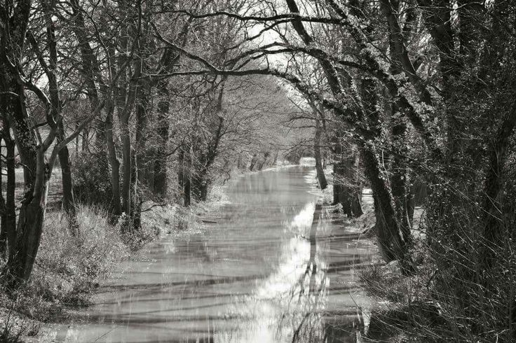 Beautiful Wey and Arun Canal, Loxwood, West Sussex