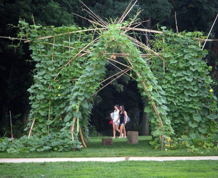 9 best images about gourd tunnel on pinterest parks arches and facebook - Idee de genie jardin ...
