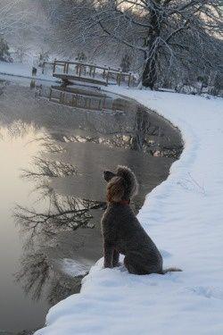 Winter Poodle Beautiful scene