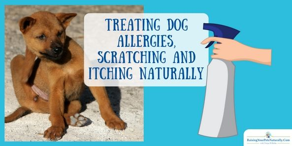 Confused on how to clean your dog's ears? How often should you clean your dog's ears and can you clean your dog's ears at home? Check out our how-to and how often guide to clean your dog's ears.