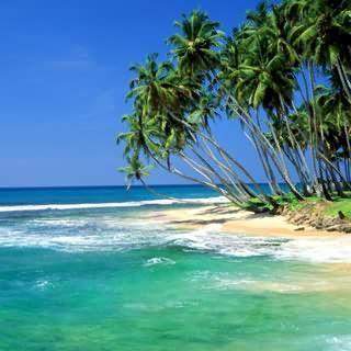 Beach. Sea. Sun.