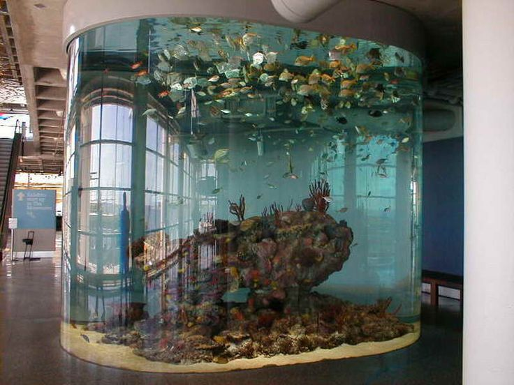 How to Decorate Fish Tank Designs Ideas: Architectural Cool Fish ...