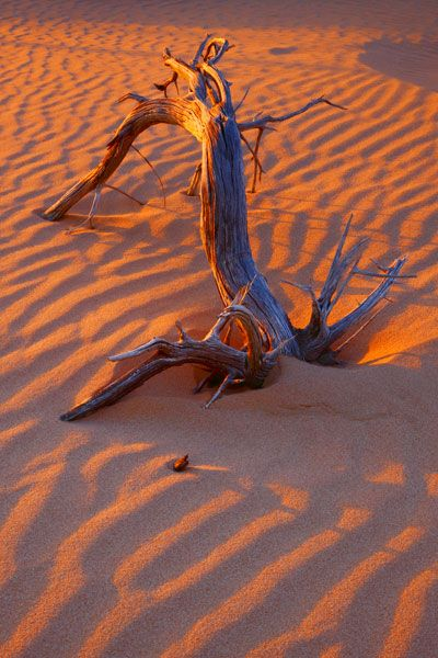 Picture of Mungo National Park, Outback NSW, NSW, Australia