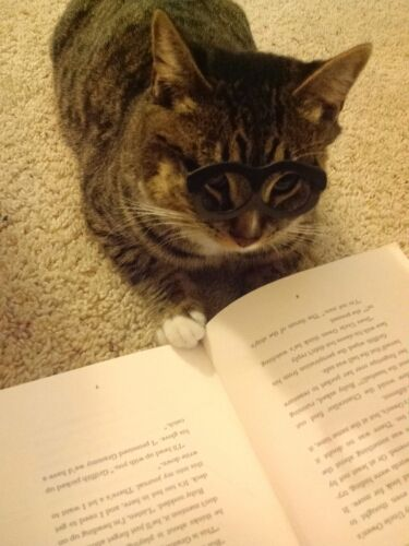 Educated cat