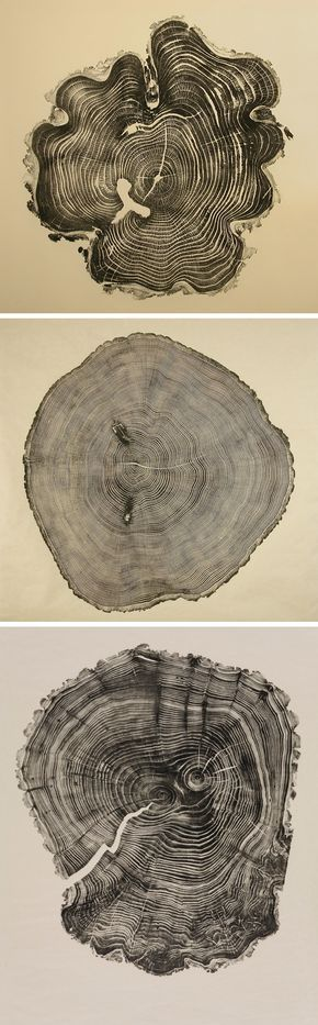 Honey Locust, Southport Oak, & Willow ~ woodcuts by Bryan Nash Gill