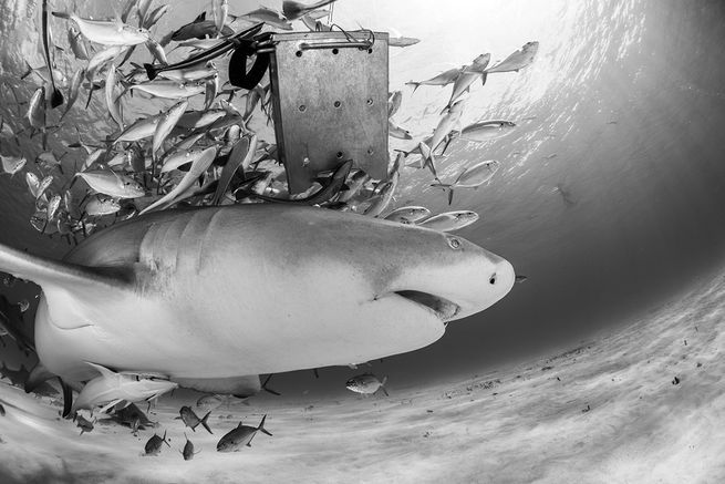 Presenting the 2017 readers choice awards for best overall scuba diving in the Caribbean and Atlantic Ocean.