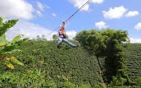 Deportes extremos en medio de cultivos de Café.