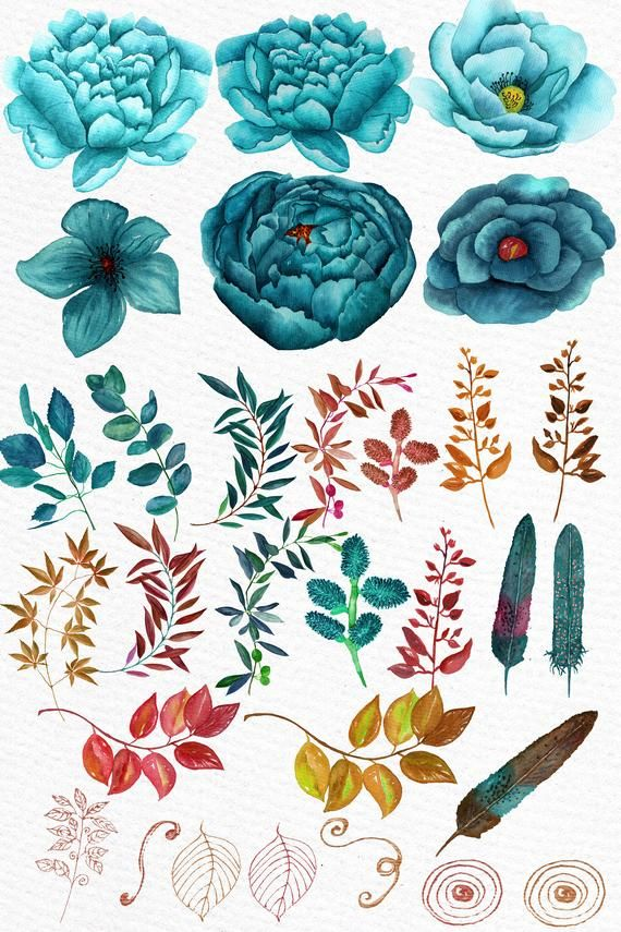 Watercolor Clipart Watercolor Flowers Autumn Flowers Teal