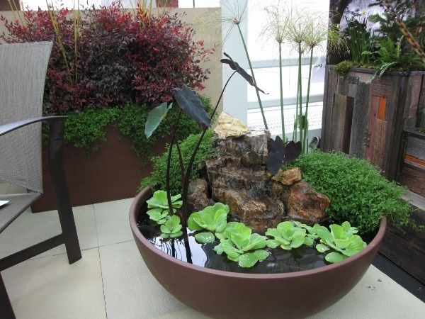 Creative indoor gardening plants