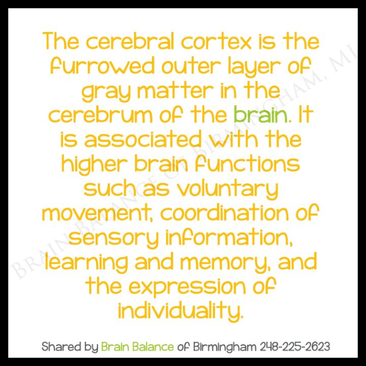 The #cerebral #cortex is the furrowed outer layer of gray matter in the #cerebrum of the #brain, associated with the higher brain functions such as voluntary movement, coordination of #sensory information, #learning and #memory, and the #expression of #individuality. It grows thicker as you learn to use it. #brainfacts #education #learning #facts #Birmingham #MI #brainbalance #addressthecause