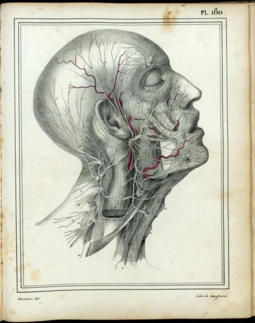 fuckyeahneuroscience:  University of Toronto, Anatomica, 1522-1867.  This collection features approximately 4500 full page plates and other significant illustrations of human anatomy selected from the Jason A. Hannah and Academy of Medicine collections in the history of medicine at the Thomas Fisher Rare Book Library, University of Toronto. Each illustration has been fully indexed using medical subject headings (MeSH), and techniques of illustration, artists, and engravers have been ...