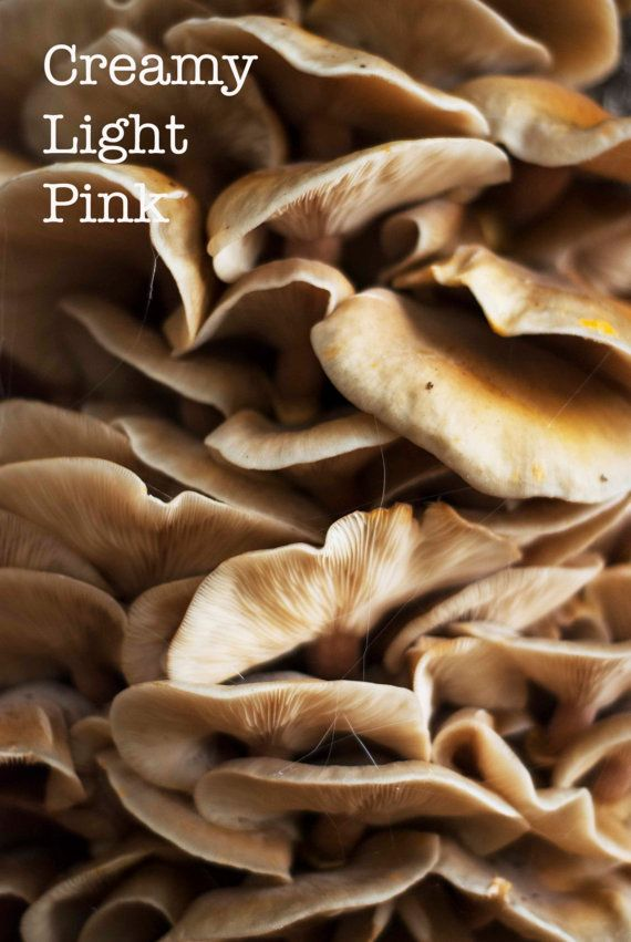 Fungi macro photograph; this forest photo is available as instant download in my #etsy shop #CreamyLightPink #naturephotograph #walldecor #fineart #minimalart #autumn #Fall #mushrooms