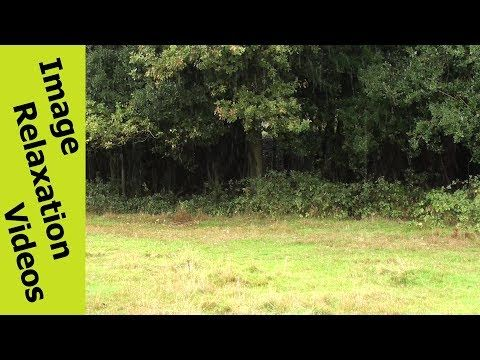 Light Rain In Field – Light Rain Sound Effects – Relaxing Nature Sounds By IRV - http://www.imagerelaxationvideos.com/light-rain-in-field-light-rain-sound-effects-relaxing-nature-sounds-irv/