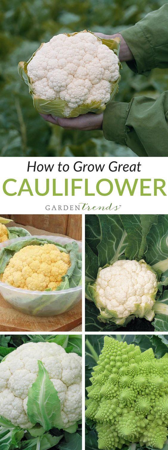 best gardening images on pinterest vegetable garden vegetables
