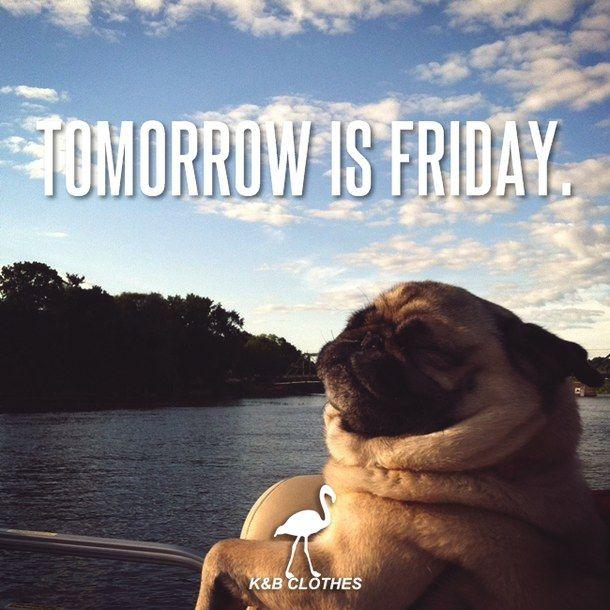 Tomorrow Is Friday #tomorrowisfriday pug boat sky funny